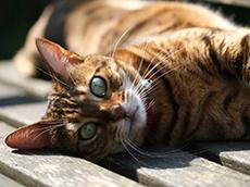 bangle cats blog image